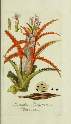 Jarhg.1 (1778) - Plantarum indigenarum et exoticarum icones ad vivum coloratae, oder, Sammlung nach der Natur gemalter Abbildungen inn- und ausländlischer Pflanzen, für Liebhaber und Beflissene der Botanik / - Biodiversity Heritage Library