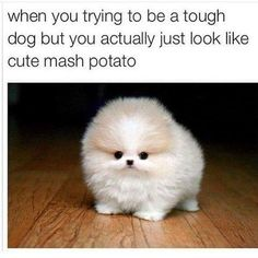 50 Hilarious (And Relatable) Dog Memes For National Dog Day - Funny Dog Quotes - Precious. The post 50 Hilarious (And Relatable) Dog Memes For National Dog Day appeared first on Gag Dad. Funny Animal Jokes, Funny Dog Memes, Cute Funny Animals, Funny Cute, Cute Dogs, Funniest Animals, Memes Humor, Cute Puppy Meme, Funny Dog Pics