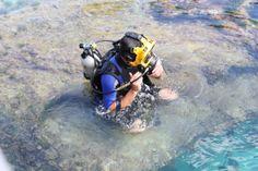 Scuba diving in a shark tank