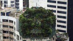 Una sospechosa construcción cubierta de plantas en lo alto de un edificio de 19 pisos en Guangzhou, China