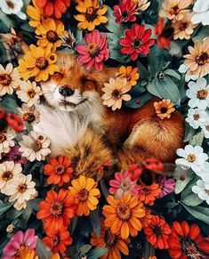 karencantuq: i hope you find whatever your heart needs. my absolute favorite fox Cute Baby Animals, Animals And Pets, Funny Animals, Beautiful Creatures, Animals Beautiful, Cute Fox, Tier Fotos, Animal Wallpaper, Belle Photo