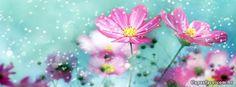 Capas para facebook de Flores Coloridas 2