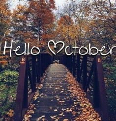 Hello October October Wallpaper, Fall Wallpaper, Seasons Months, Months In A Year, Happy October, Happy Fall Y'all, October Born, Hello September, September Quotes