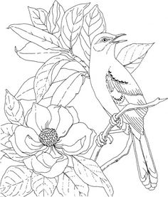 Mockingbird and Magnolia Mississippi State Bird and Flower coloring page | Super Coloring