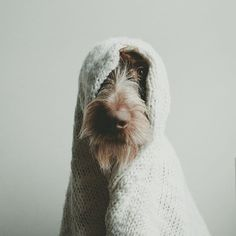 I feel like pulling a blanket over my head as well. Source by The post 9 Images That Prove The German Wirehaired Pointer Has An Artistic Side – American Kennel Club appeared first on Madelaine Dogs. Gsp Puppies, Pointer Puppies, Pointer Dog, Weimaraner, Big Black Dog Breeds, Black Dogs, Wirehaired Pointing Griffon, Puppy Classes, Dog Activities