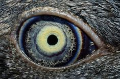The (animal) eyes have it! - TODAY.com. The eye of a young fairy penguin.