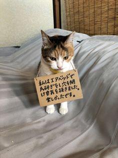 楽しかったです。がなんともいえない。 猫の気持ちで考えると怒れなくなるし笑っちゃうね。 Cute Cats And Dogs, I Love Cats, Cats And Kittens, Japanese Funny, Japanese Cat, Pretty Cats, Beautiful Cats, Nature Animals, Animals And Pets