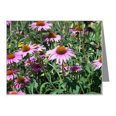 Coneflowers Note Cards (Pk of 20) on CafePress.com