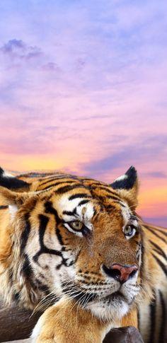 Small Wild Cats, Big Cats, Cute Cats, Beautiful Cats, Animals Beautiful, Wild Cat Species, Animals And Pets, Cute Animals, Tiger Paw