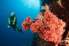 Diving and Snorkeling in Fiji