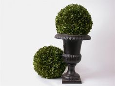 Preserved Boxwood Ball - 12 inch