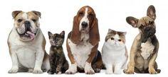 ¿Tener asma significa que no puedas tener mascotas? NO!