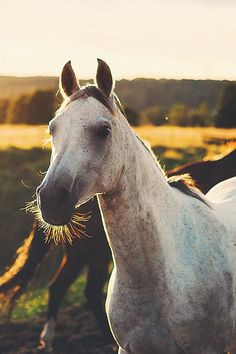 horse wallpaper apple – My Pin Page Baby Horses, Horses And Dogs, Cute Horses, Pretty Horses, Horse Love, Wild Horses, Beautiful Horses, Animals And Pets, Cute Animals