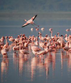 La Camargue, une région connue pour sa #faune abondante et diversifiée #pinkflamingo #birds #nature #France