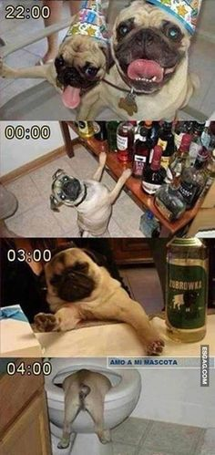 Esto es lo que pasa cuando dejo a mi perro un sábado por la noche @ www.elmemeno.com