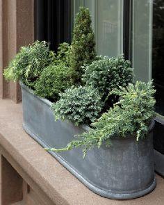 #pflanzenfreude #nadelbäume #conifers #green #grün #garten #garden #winter
