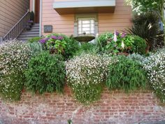 This sumptuous front garden features trailing plants that spill over the brick wall, a lush treatment for a narrow space. Posted by HGTV Fan volleyken