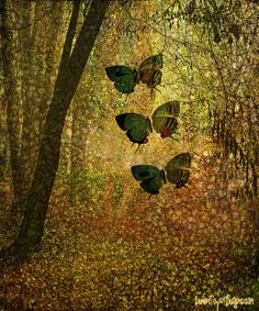 Butterfly Forest by Citra Artist: Christy RePinec, LemonTrystDesigns©2014. Citra Solv art.