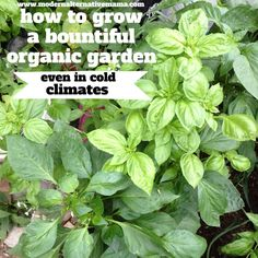 Growing a Bountiful Garden in Cold Climates | Modern Alternative Mama