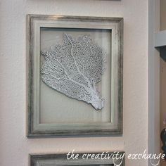 DIY Double Sided Glass Frames for Framing Shells and Sea Fans {The Creativity Exchange}