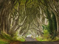 """The Dark Hedges: Northern Ireland - Because even fairy tales are dark and full of terrors. Local legend has it that """"the Grey Lady"""" haunts the road at dusk."""