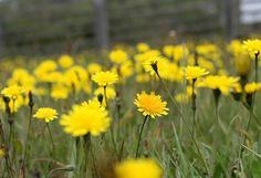 Organic Gardening Series: Natural Weed Control