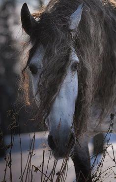 Gosia Mąkosa Equine Art & Photography ~ Devoro II PRE