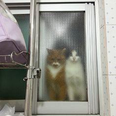 "* * ORANGE CAT: "" I toles ya notz to look at de sun too long. Nowz everythin's blurry. blah ! """