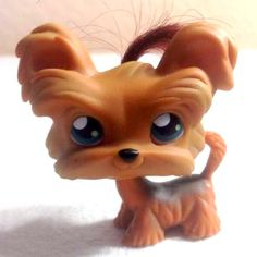 LPS#0006 (BIS) YORKIE  Dog (variant) Brown, dark hair, blue eyes