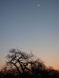 Bush moon, Klaserie Game Reserve, Hoedspruit, South Africa - So pretty (will be there tonight, only 5 hours drive :) April Places Ive Been, Places To Go, Game Reserve, 5 Hours, South Africa, Moon, Spaces, Holidays, Sunset