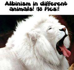 Albinism in different animals! (18 Pics)