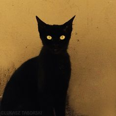 *** black cat via @Karen Jacot Jacot Jacot Jacot Reilly