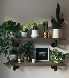 7 Robust Tips AND Tricks: Glass Floating Shelves Basements floating shelves styling plants.Floating Shelves Alcove Diy floating shelves above couch inspiration.Floating Shelves Above Couch Awesome. Indoor Garden, Indoor Plants, Home And Garden, Small Plants, Indoor Balcony, Indoor Plant Wall, Balcony Garden, Decoration Christmas, House Plants Decor