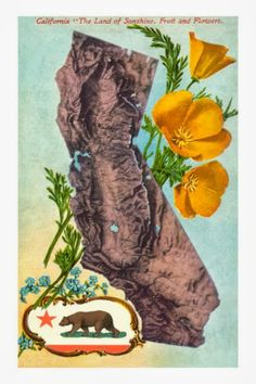 Antique Wolflike Bear California Bear Flag on State Postcard | Bear Flag Museum