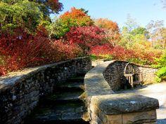 Garden stairway, Everglades, Leura Landscape Architecture, Landscape Design, Stairway To Heaven, Footprints, Historic Homes, Stairways, Garden Bridge, Home And Garden, Corner