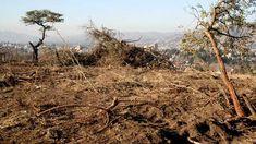 Deforestación en Cordobá