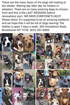 4/13/18 ‼️‼️‼️URGENT‼️‼️ NEED PLACEMENT/ FOSTER/ ADOPTERS/ - ADOPTABLES AT BROOKHAVEN ANIMAL SHELTER, NY‼️‼️ /IJ3