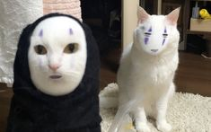 the best face swap ever 🐱