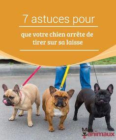 Water Dispenser, Basset Hound, Westies, Yorkshire Terrier, Border Collie, Pixar, French Bulldog, Rio, Labrador