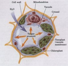 Chapter 2 : Cells