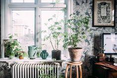 Window shelf with plants
