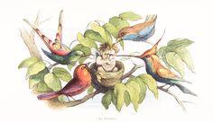 An Invader(Fairy in Birds Nest!)