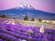 wild-purple-flowers-wallpaper-for-ipad-2,1024x768,ipad-2-wallpaper,494.jpg (1024×768)