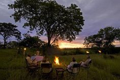 Find your perfect African safari. Best priced safari holidays available. Your trusted specialized safari operator. Bioluminescent Bay, African Holidays, Safari Holidays, Holiday Nights, Walking Holiday, Game Reserve, Photography Courses, Travel Info, African Safari