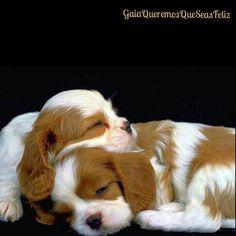☆Me gustaría vivir en un mundo donde vivan más animales y menos humanos inhumanos☆   #spiritual #lovedogs #cute #aquiyahora #hereandnow #animals #peace #paz #photooftheday #amazing #adorable #dream #doglover #dog #Gaia #GaiaQueremosQueSeasFeliz #Namaste