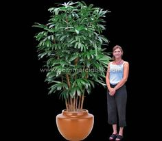 Artificial Rhapis Palm is a replication of a living Lady Palm Tree. The Rhapis Palms silk dark green foliage is graceful, and we use fire retardant Rhapis Palm foliage to build a premium grade faux Rhapis Palm Tree.