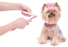 Animal Wellness And Rehab Center - Veterinarian In Bellevue, WA USA :: Dental Cleaning is important for your Pets