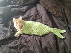 Mermaid kitty lol