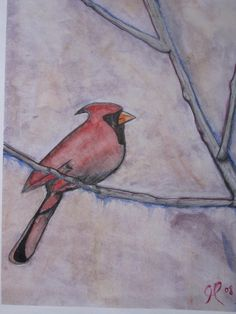 cardinal- watercolor