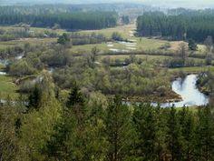 Floodplain meadow at Mustjogi river